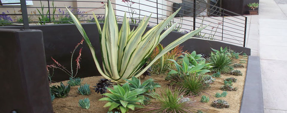 san-diego-drought-tolrant-planting-slider